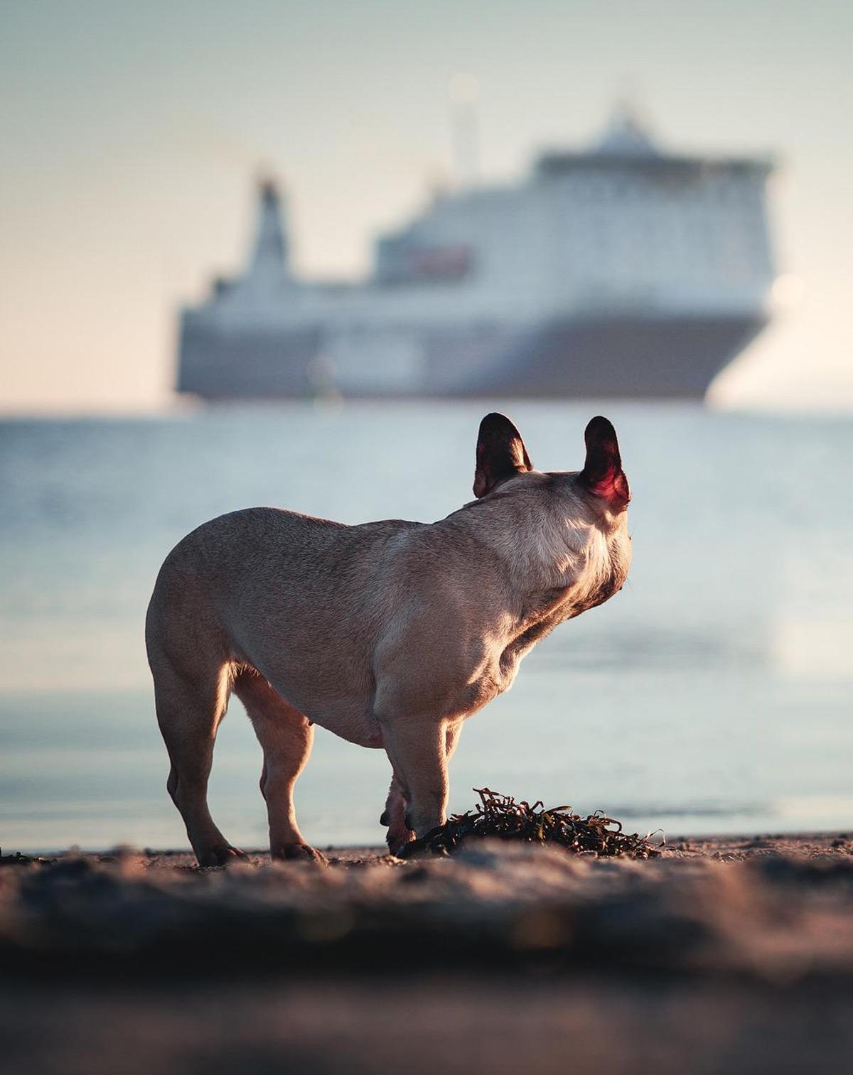 Hund mit Schiff in Travemünde